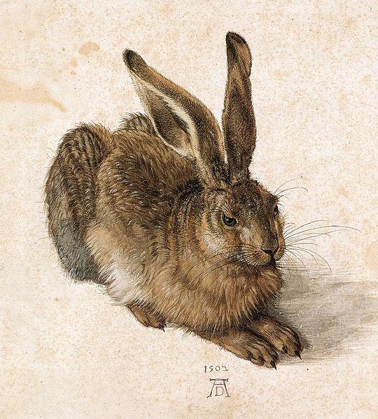 Albrecht Dürer, Jonge haas, 1502: Albertina, Wenen